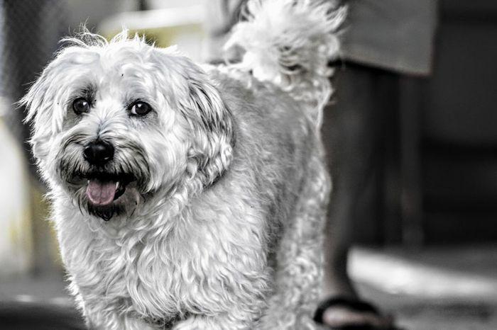 Animal Themes Close-up Dog Domestic Animals Looking At Camera No People One Animal Pets