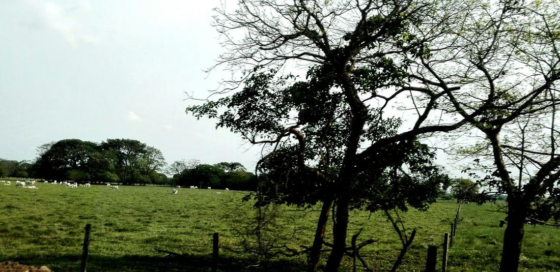 Landscape_photography Llanos Beautiful Nature