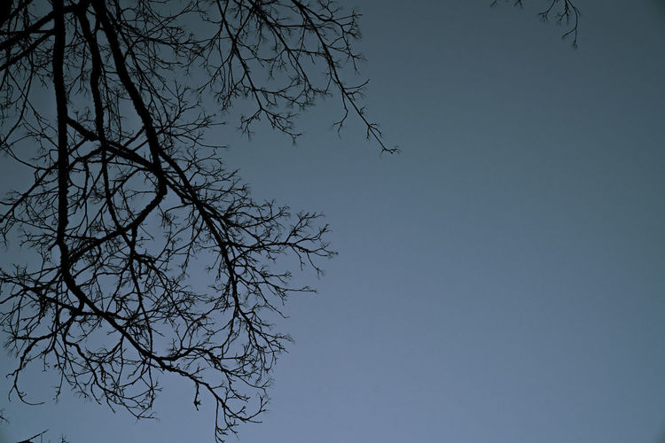 Branches in a