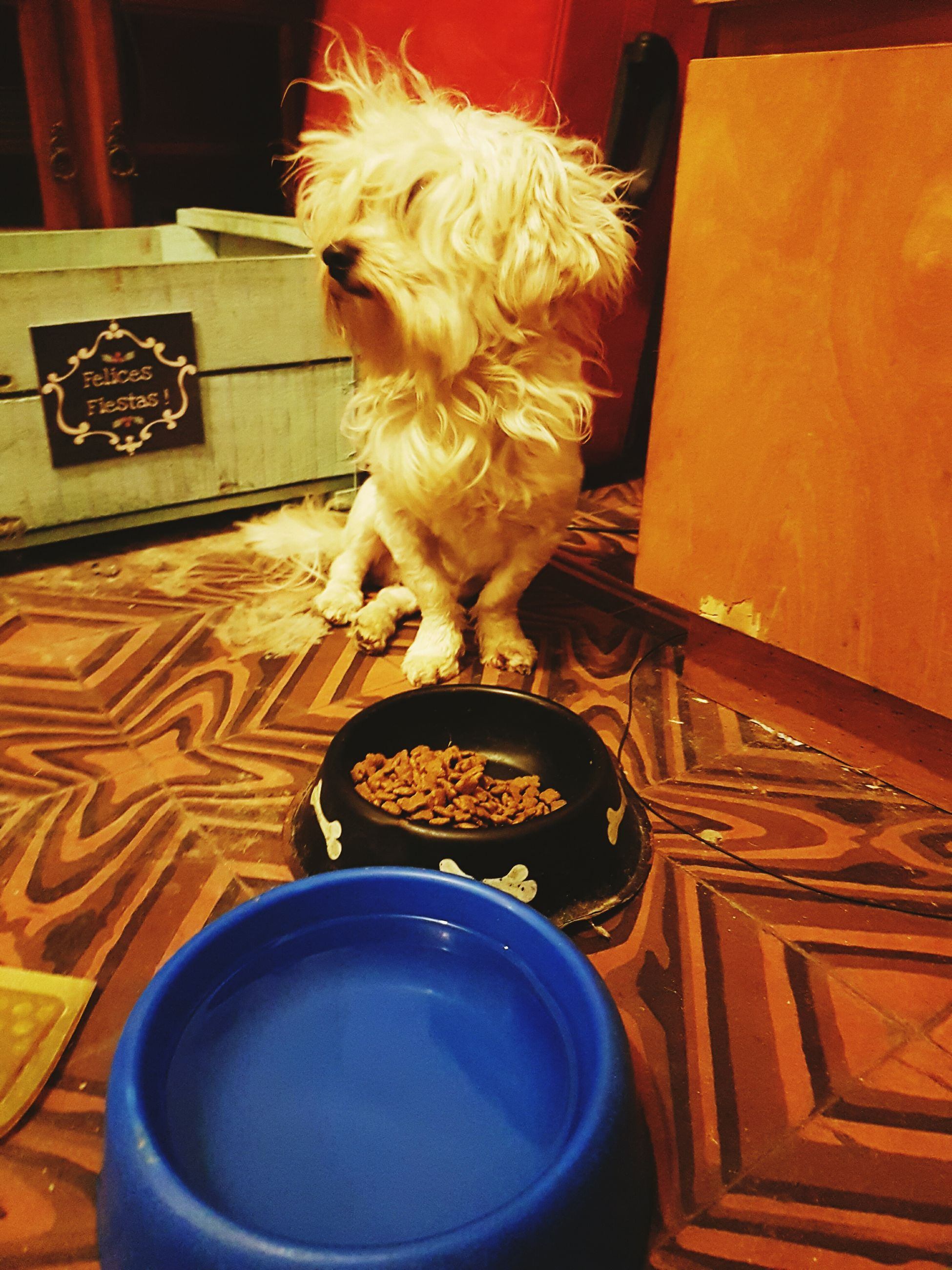 pets, domestic animals, animal themes, mammal, one animal, dog, indoors, no people, table, domestic cat, home interior, day