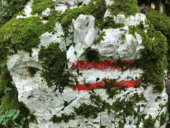 Austrian Flag Austria Plant Tree Day No People Nature Creativity Growth Art And Craft Outdoors Red White Color Green Color Full Frame Close-up Beauty In Nature Emotion Land Austria Plant Tree Day No People Nature Creativity Growth Art And Craft Outdoors Red White Color Green Color Full Frame Close-up Beauty In Nature Emotion Land