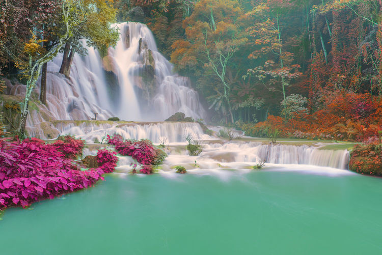 Water Beauty In Nature Plant Scenics - Nature Long Exposure Waterfall Motion Tree Nature Blurred Motion Waterfront Flowing Water Day Forest No People Growth Tranquility Idyllic Flower Outdoors Flowing Power In Nature