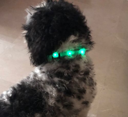 Light up Dog Love Illuminated One Person Real People Close-up Green Color Body Part Portrait