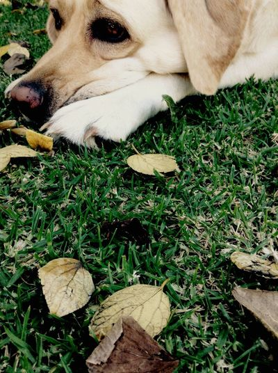 Close-up of dog resting on grassy field