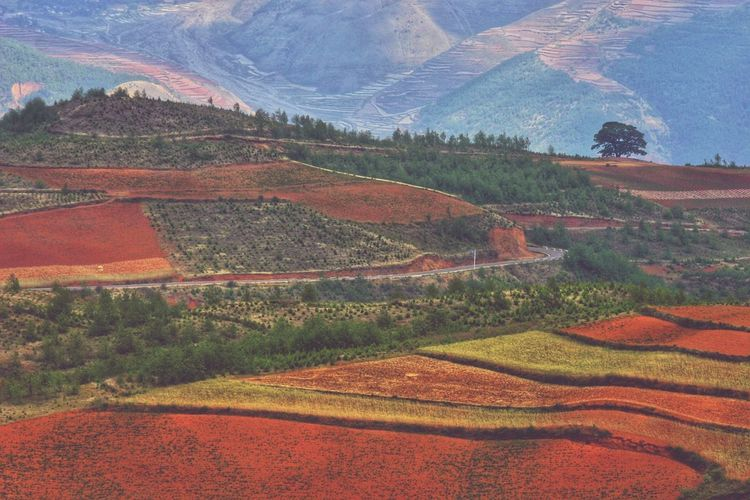 Yunnan Rural Scene Multi Colored Agriculture Full Frame Field Landscape Cultivated Land Agricultural Field Farmland Plantation Patchwork Landscape Terraced Field Mountain Range Farm Rice Paddy