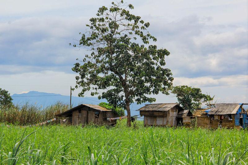 Tribal houses