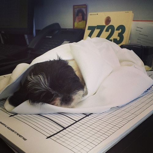 Meet Oreo!!! Atwork Coworkerboughtapuppy :)