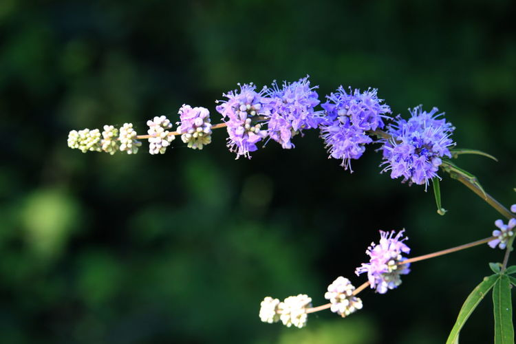 Close-up of small purple flowers