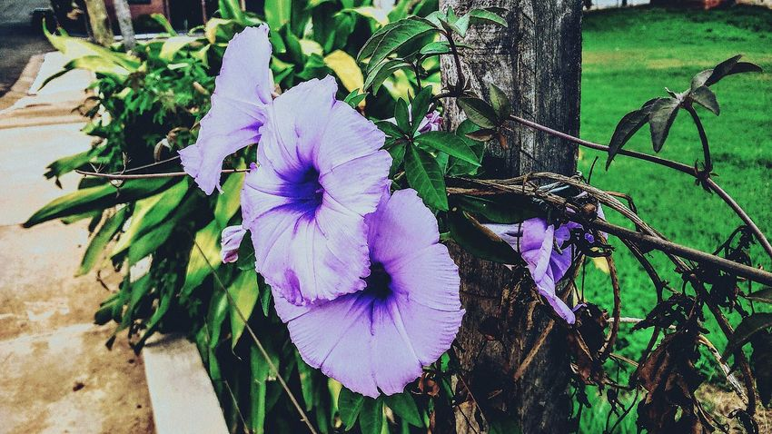 Purple Flower Flowers Cityscape Flowerporn Flowers,Plants & Garden Nature Beautiful Nature Nature Everywhere Check This Out Taking Photos