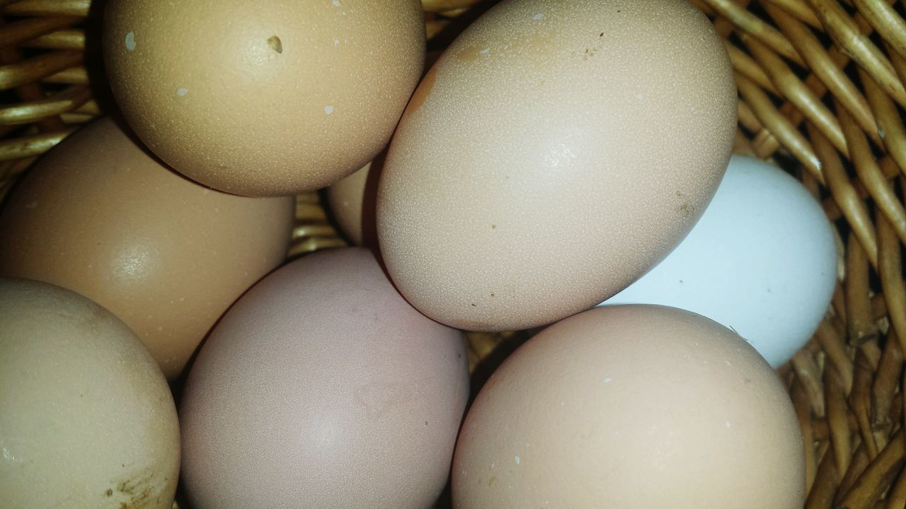 egg, food and drink, food, close-up, healthy eating, full frame, indoors, no people, easter, fragility, egg carton, freshness, day