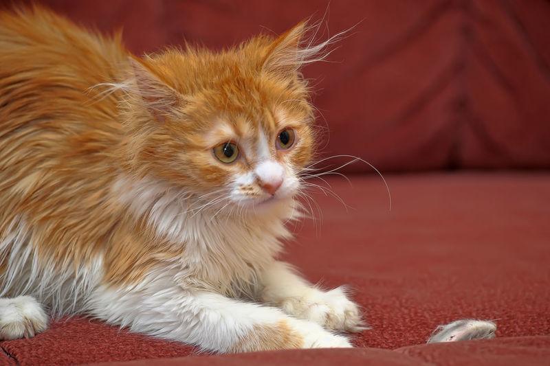 Portrait of a cat looking away