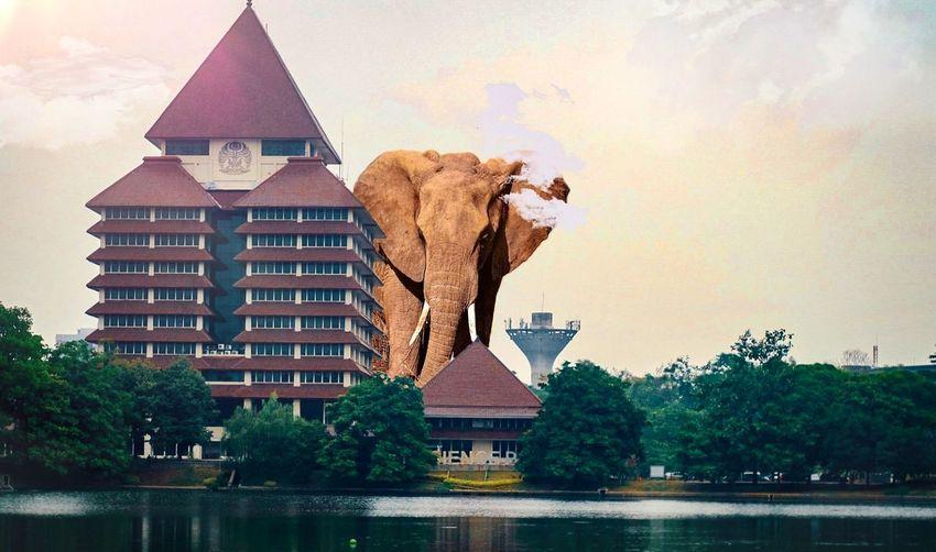 Elephant will