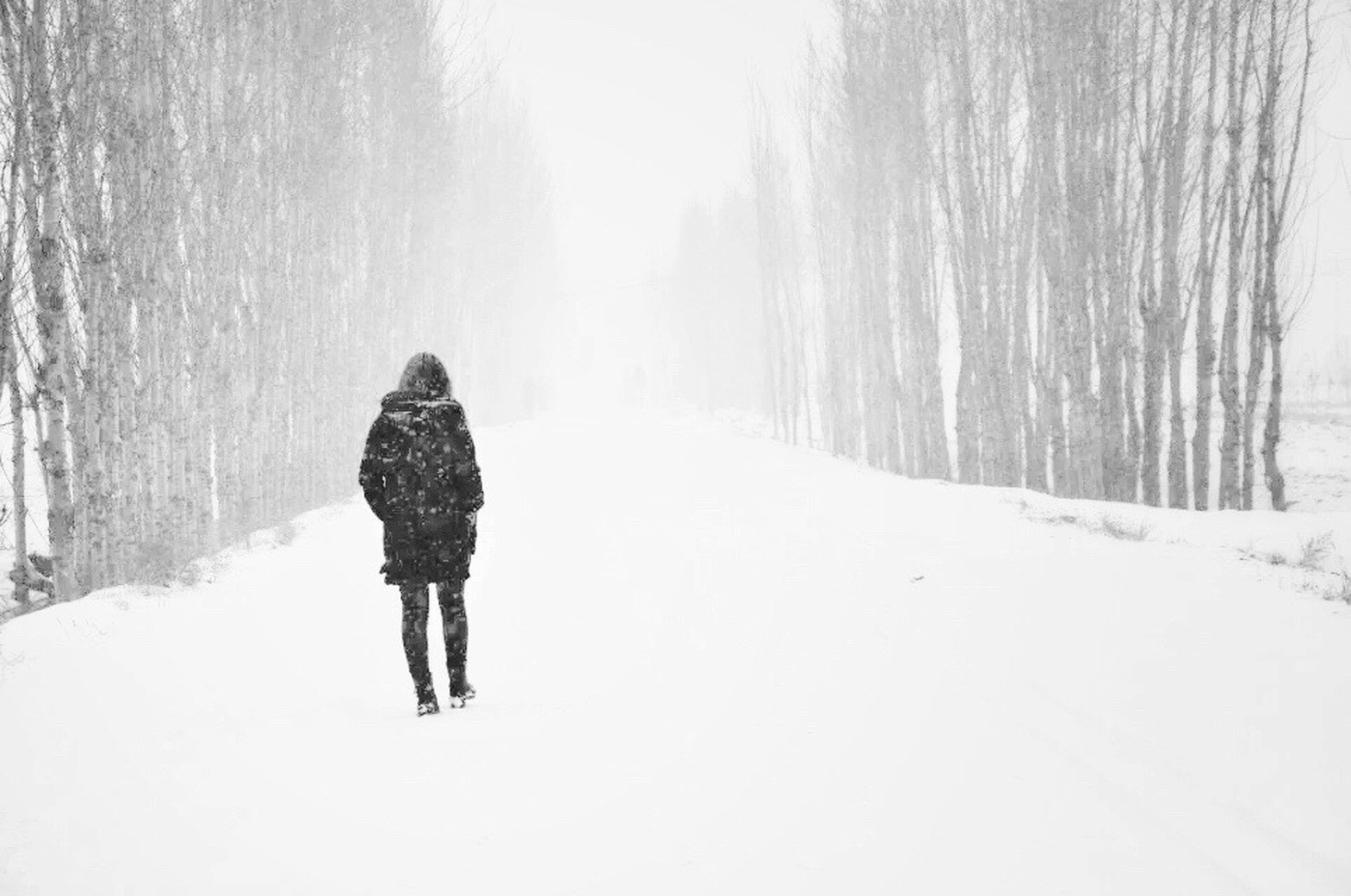 snow, winter, cold temperature, snowing, one person, full length, rear view, people, day, one woman only, tree, outdoors, nature, adults only, beauty in nature, only women, adult, warm clothing