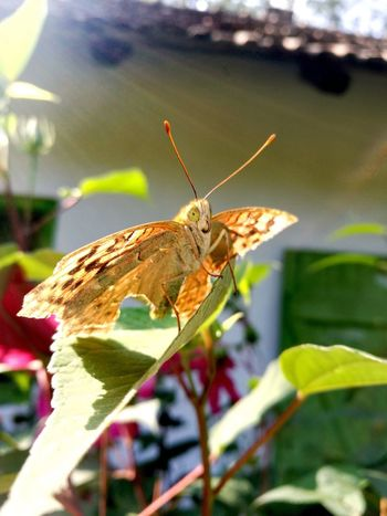 Perching Butterfly - Insect Leaf Full Length Insect Flower Close-up Animal Themes Plant Wildlife