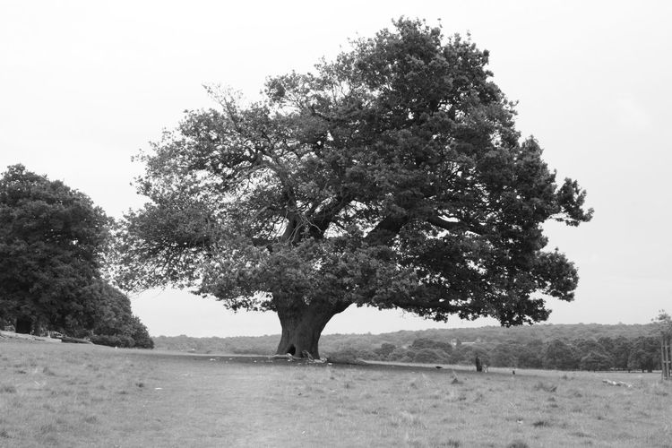Tree Beauty In Nature No People Sky Strength Blackandwhite Eye Em Nature Lover EyeEm Best Shots - Black + White Tranquility