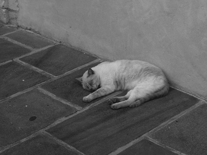 Le sommeil du