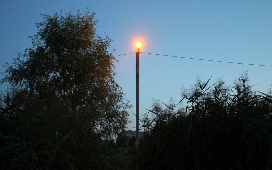 Landscape Evening Ukraine Trees Plants Lamppost Lamp Light
