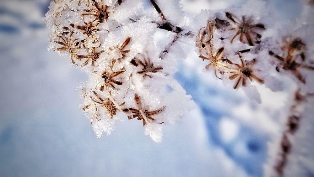 樹氷❄️ Nature Photography 北海道 Hokkaido 田舎暮らし VSCO 雪 自然 冬 Black_chica1802 Winter Nature Tree Frozen Close-up Fragility Snow Beauty In Nature Cold Temperature Outdoors Snowflake Flower Day