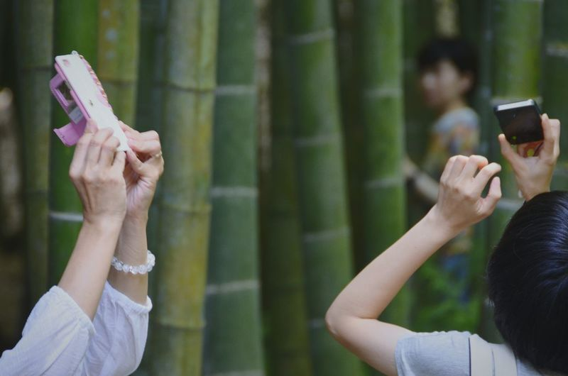 People photographing at bamboo grove