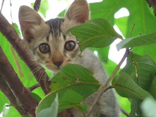 Call of wild Animal Animal Eye Animal Head  Animal Themes Cat Domestic Animals Domestic Cat Green Color Leaf Looking At Camera Mammal Nature One Animal Pets Portrait Tree