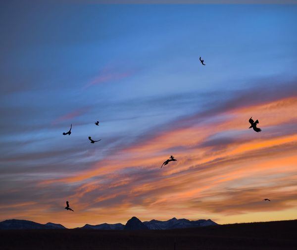 Silhouette birds flying in sky during sunset