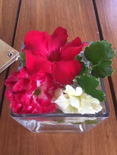 Flower Indoors