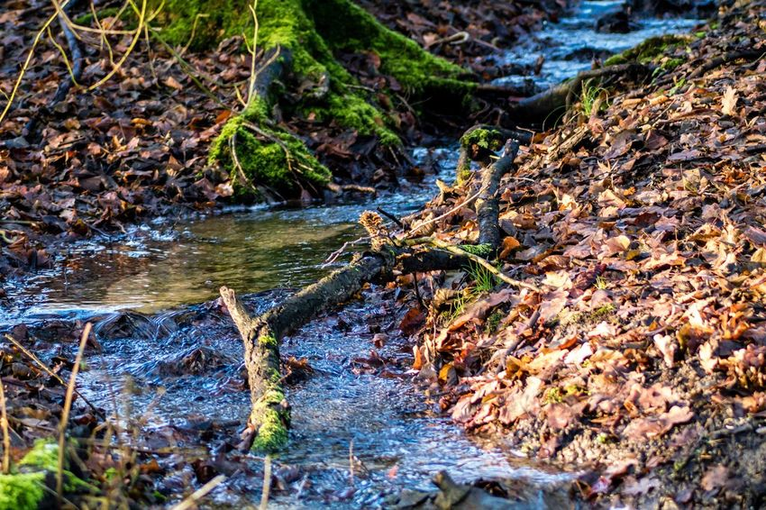 Forest Nature Water Moss Outdoors Tree Trunk No People Stream - Flowing Water Day