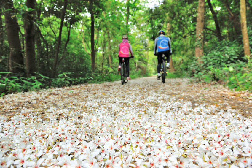 Quiet forest, floating under the white tung flowers, covered with country roads. Activity Adults Only Adventure Bicycle Biker Cycling Cycling Helmet Exercising Footpath Forest Headwear Healthy Lifestyle Men Mid Adult Motion Mountain Bike Moving Activity Nature Rear View Recreational Pursuit Riding Speed Sports Race Tung Blossom WoodLand