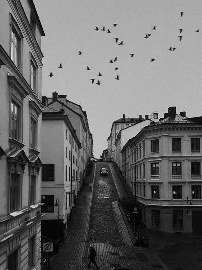 Flock of birds flying over buildings in city