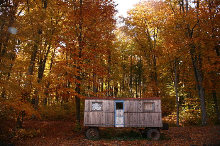 Wagon Among Trees In Forest During Autumn