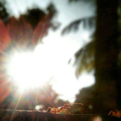 Photography Instagraphy Instaeve Eveningclick Sunlight Instalove