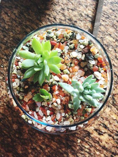 Freshness Nature In Botle Terrarium No People Terrarium🍀