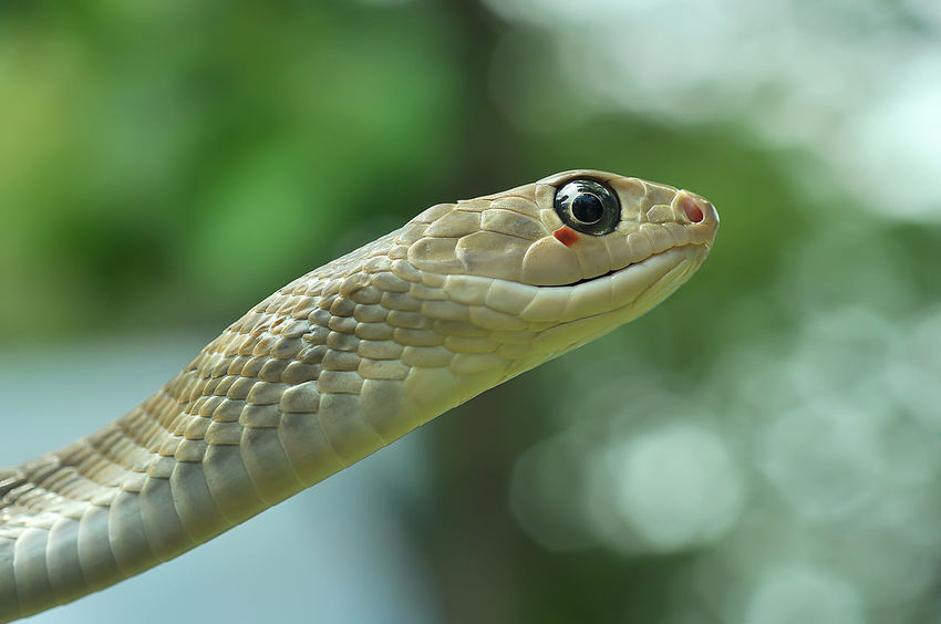 beautiful sweet snake Animals In The Wild Wildlife & Nature Wildlife Photography Aimal Of Thailand Aniamls Animal Animal Themes Animal Wildlife Animals In The Wild Close-up Day Focus On Foreground Nature No People One Animal Outdoors Reptile Wildlife