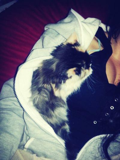 Cat In Jacket