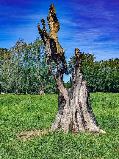 Dead tree on field against sky