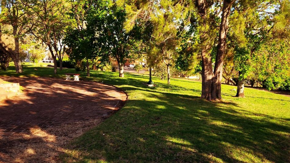 Fray Bentos, Río Negro, Uruguay. September 2014. By Andrés Bentancourt Beauty In Nature Day Empty Footpath Grass Grassy Green Green Color Growth Idyllic Landscape Lawn Nature No People Outdoors Park Park - Man Made Space Scenics Sunlight Sunny Tranquil Scene Tranquility Tree Tree Trunk Walkway