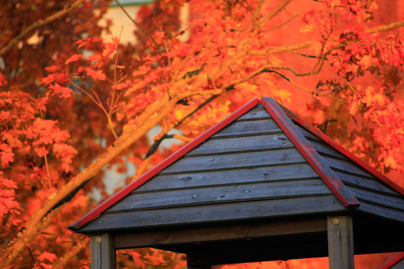 Autumn roof Naturephotography Beautifulnature Beautyofnature Naturebeauty Moment Capture Composition Forestphotography Marijampolė Autumncolors🍁 EyeEm Selects Nature Tree Leaf Autumn Red Mountain Forest Change Wood - Material Architecture Sky Maple Leaf Maple Maple Tree Fallen Leaf Leaves Autumn Collection Roof Branch Fallen
