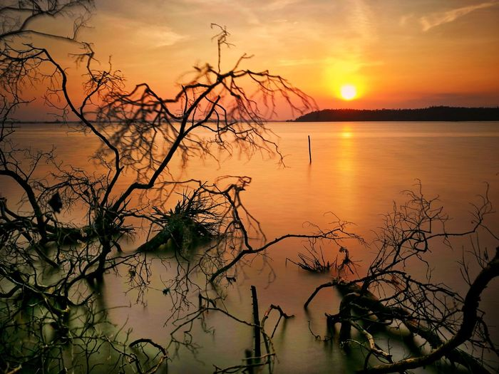 the sunset.. remains the most beautiful story.. Landscape Landscape_photography Nature Nature Photography Sunset Sunset #sun #clouds #skylovers #sky #nature #beautifulinnature #naturalbeauty #photography #landscape Sunsetporn Sunset_captures Sunsetlover Sunset Photography WeLoveBalikpapan Wonderful Indonesia Balikpapan City Tree Water Sunset Tree Area Dawn Rural Scene Lake Mountain Bare Tree Beauty