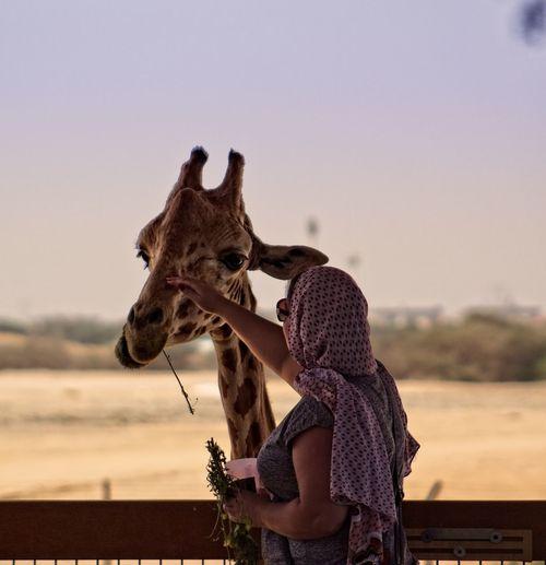 Woman touching giraffe against sky