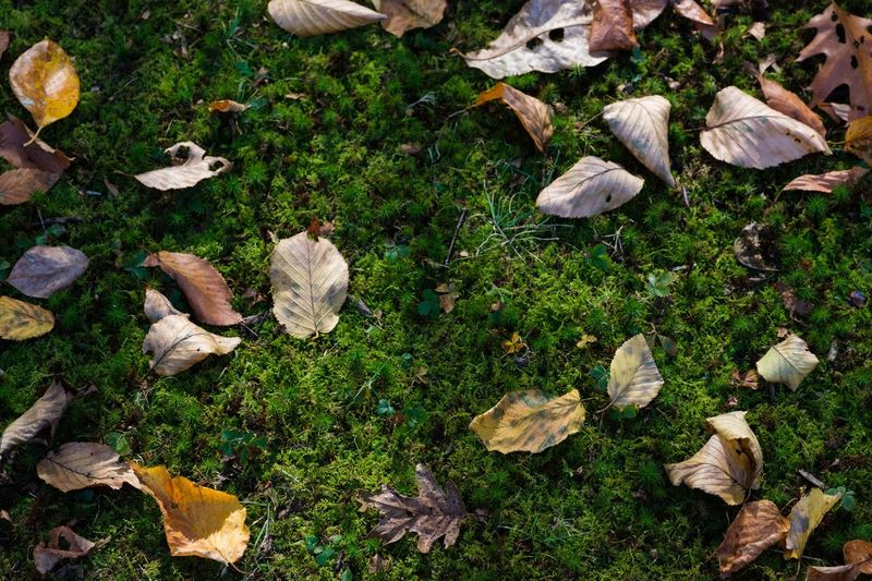 Fallin Vibes, 102117 High Angle View Nature Leaf No People Outdoors Plant Day Flower Beauty In Nature Grass Close-up Fall Forest