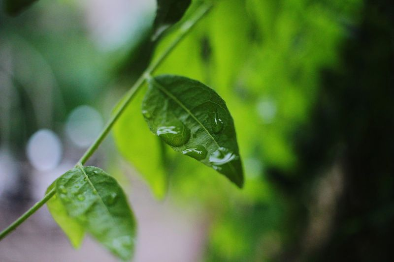 Water is existance to life. Rainsrops Are Diamonds Leaf 🍂 Close-up Green Color Plant Growth Freshness Abhishekmehtaphotography