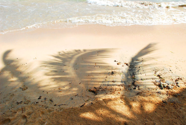 Shadow of palm leaves at beach