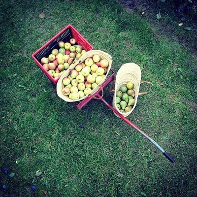 Es momento de recolectar manzanas Igersperu Instagramperu Apple Life me primavera
