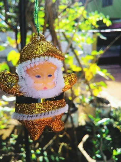 Winter is coming. Santa Focus Photography Yellow Nature Plants White Beard