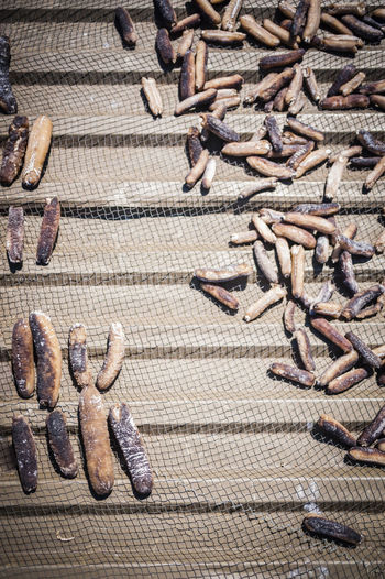 High Angle View Of Dead Sea Cucumbers On Netting