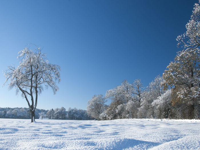 Nature Winter Bare Tree Beauty In Nature Beauty In Nature Blue Blue Sky Clear Sky Cold Temperature Day Frosted Trees Frozen Landscape Nature No People Outdoors Scenics Sky Snow Tranquil Scene Tranquility Tree White Color Winter