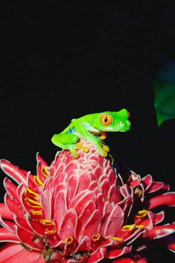 Frog Nature Cute Pets Grenouille Animals