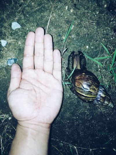 Snail Snail🐌 Snails🐌 Snail ❤ Snail Collection Human Body Part Human Hand One Person People Outdoors Close-up One Man Only Real People Animal Animal Themes