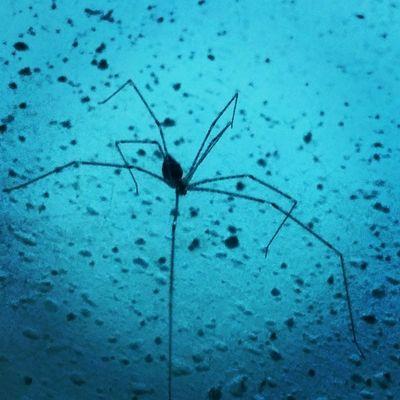 Spider Web Spiderman In Room Gagans_photography Instaludhiana