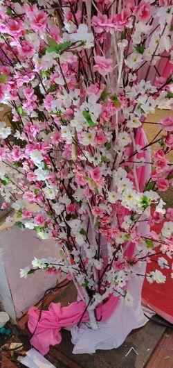 Flower Pink Color Close-up